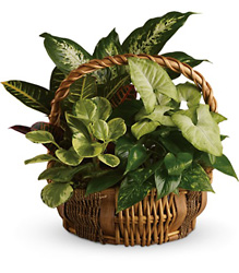 Emerald Garden Basket from Schultz Florists, flower delivery in Chicago